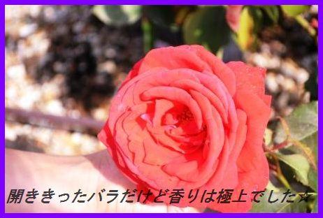 d0104926_0454989.jpg