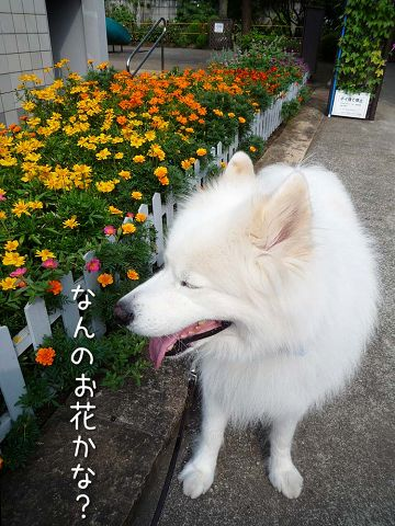 夏のお花見_c0062832_16151147.jpg