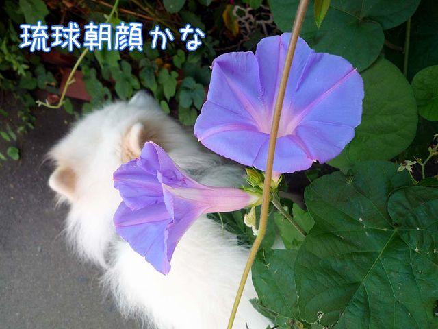 夏のお花見_c0062832_16151994.jpg