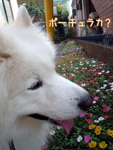 夏のお花見_c0062832_161535100.jpg