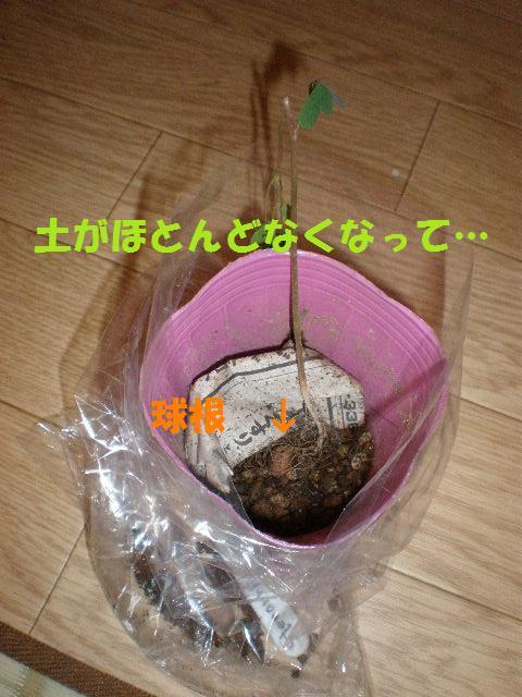 f0236744_2250111.jpg