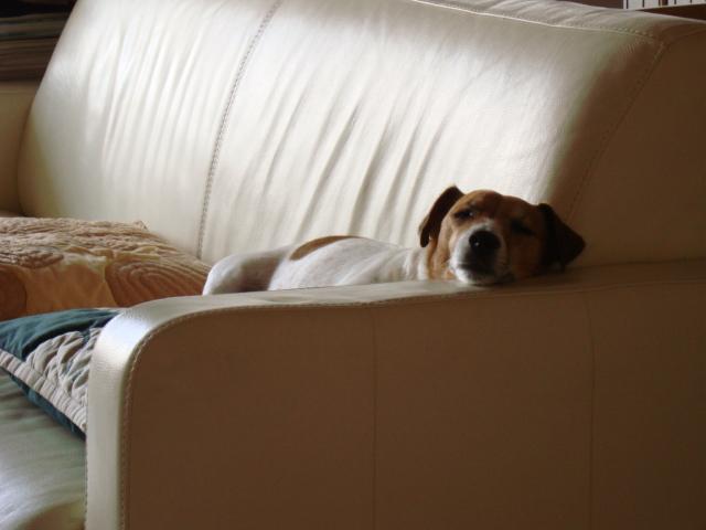 犬なのに_d0143957_1384421.jpg