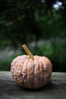 かぼちゃ_f0031259_2233165.jpg