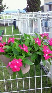 夏の花_c0218368_12231546.jpg