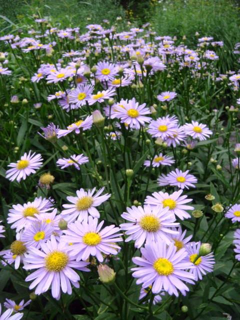 ◆ポール・スミザーの庭・・・・・・軽井沢 『 ピクチャレスク・ガーデン』_e0154682_128098.jpg