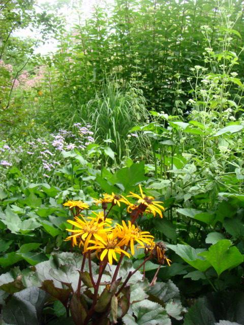 ◆ポール・スミザーの庭・・・・・・軽井沢 『 ピクチャレスク・ガーデン』_e0154682_1294299.jpg