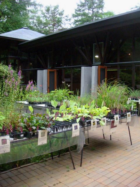 ◆ポール・スミザーの庭・・・・・・軽井沢 『 ピクチャレスク・ガーデン』_e0154682_134339.jpg