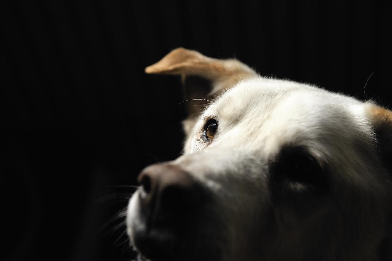 天寿を全うした犬  イチロー_e0171886_16211356.jpg