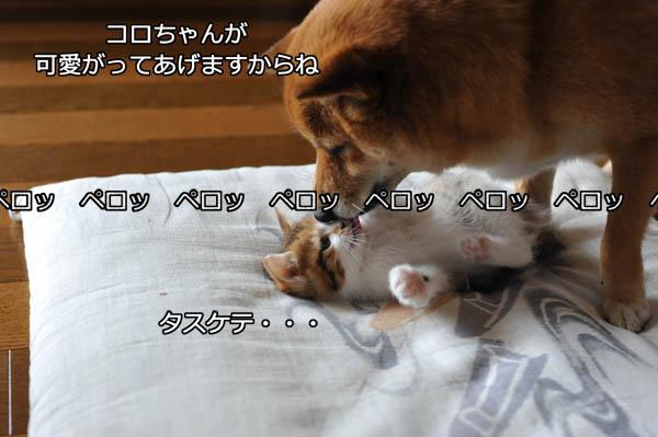 b0141397_104294.jpg