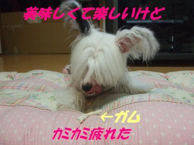 f0179203_9164345.jpg