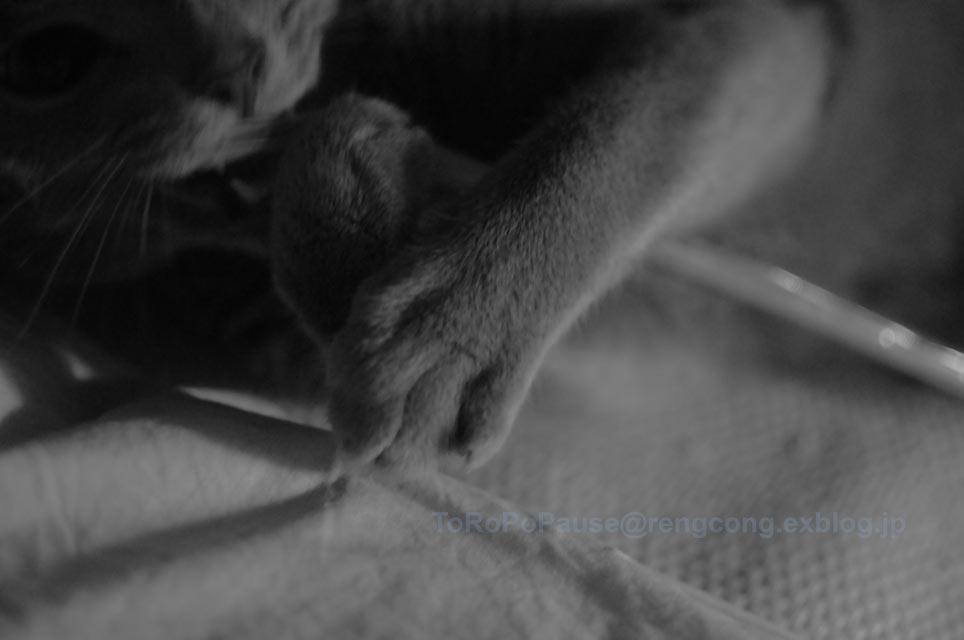 猫って割りかし_e0132518_22321965.jpg