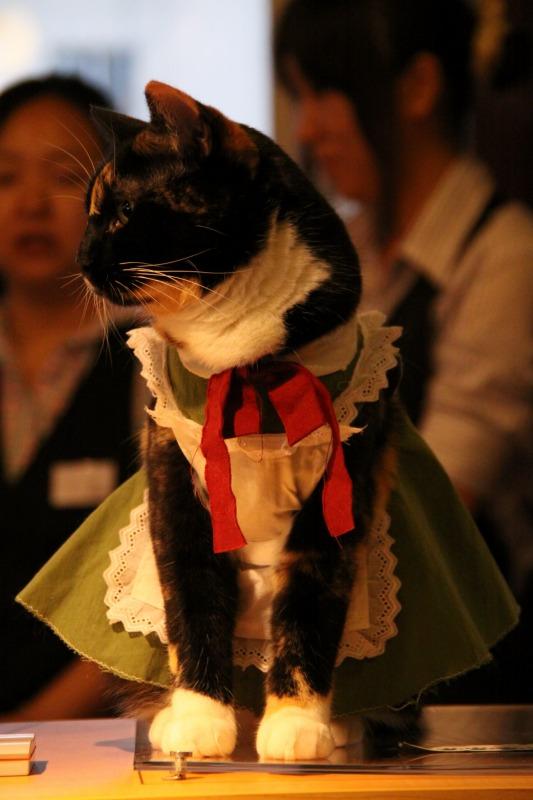 豊島区池袋「猫の居る休憩所299」_d0167436_634098.jpg
