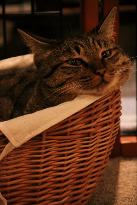 豊島区池袋「猫の居る休憩所299」_d0167436_6341545.jpg