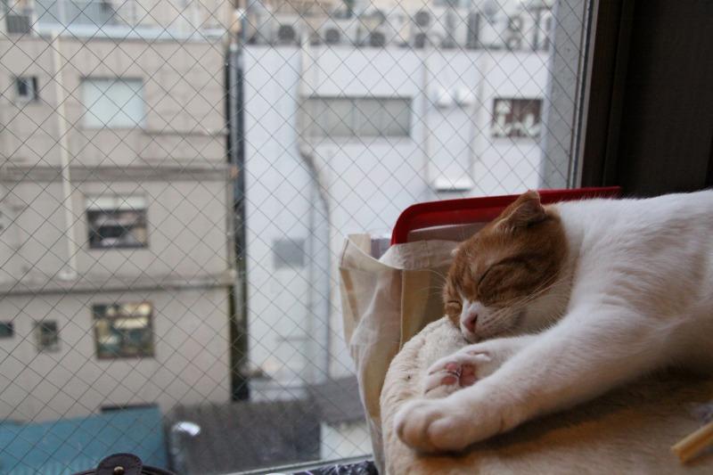 豊島区池袋「猫の居る休憩所299」_d0167436_6342599.jpg