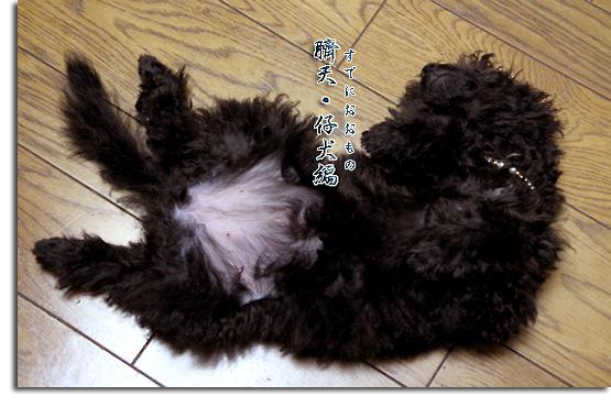 仔犬ちゃん of the Day♪ Vol. 4_e0166336_11123117.jpg