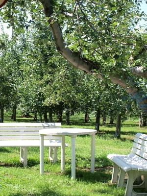 りんご狩りと三内丸山遺跡_e0158653_225585.jpg