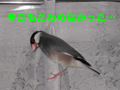 b0158061_20283557.jpg
