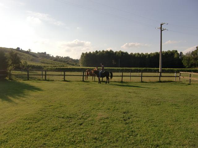 馬に乗る_f0226179_8124696.jpg
