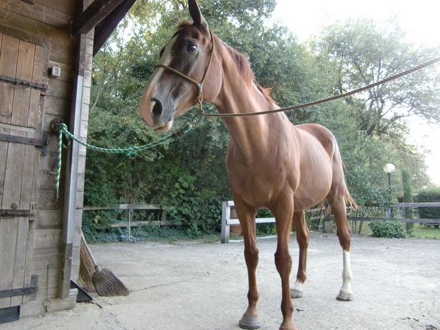 馬に乗る_f0226179_8265615.jpg