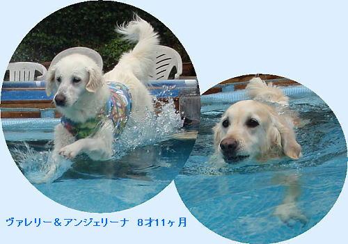 b0136381_1128840.jpg