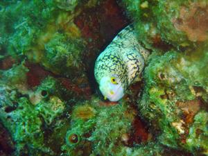 ラチャヤイ島で体験ダイビング _f0144385_20143620.jpg