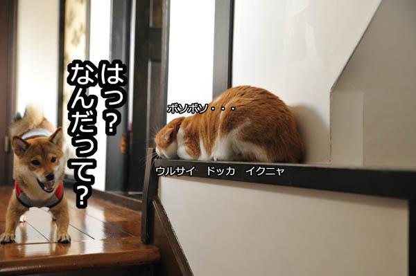 b0141397_1081022.jpg