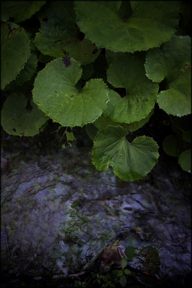 Leaves and cold water_e0022810_13415889.jpg