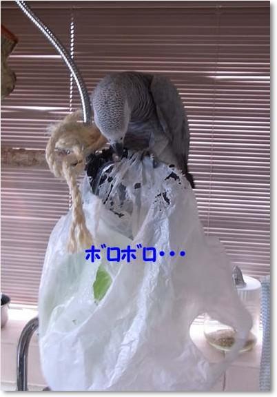 c0133013_16505983.jpg