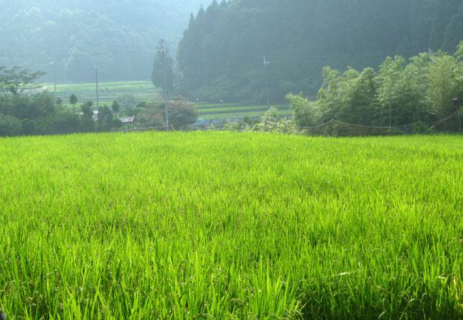 山の田圃で_e0048413_1559393.jpg