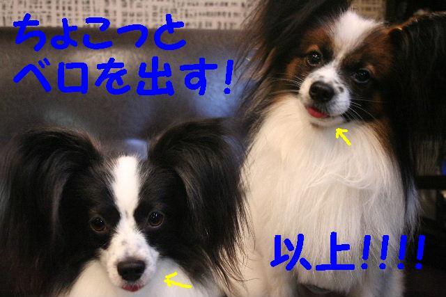 b0130018_191598.jpg
