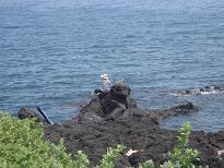 ♪ チェジュ島からピアン島 ♪_a0115924_20283071.jpg