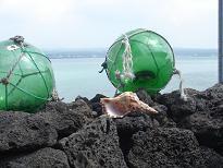 ♪ チェジュ島からピアン島 ♪_a0115924_20355574.jpg