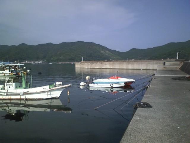 メジカの新子 & 野見湾で修理 その2 & アオリイカ_a0132631_1930244.jpg