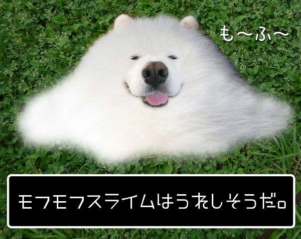 モフモフスライム_c0062832_177910.jpg