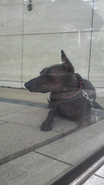 珍しい犬_c0099133_14544685.jpg