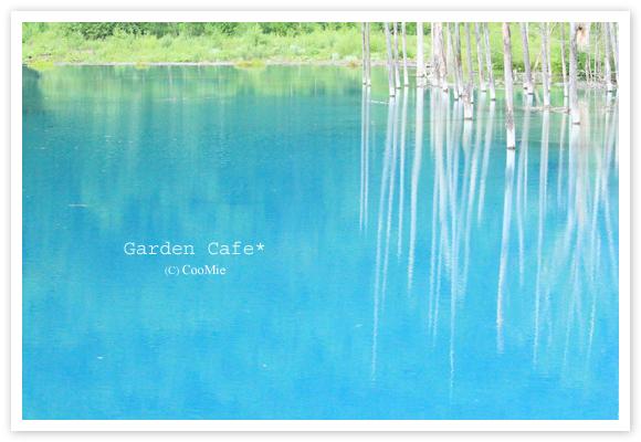 神秘の青い池♪_a0097840_0411533.jpg