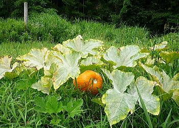 小川村、野菜、自然…_a0160955_19484865.jpg