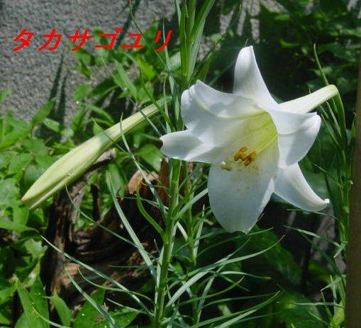 f0179357_10515924.jpg