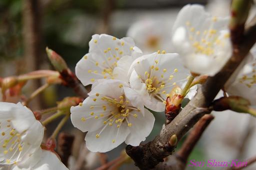 春の準備_a0164068_1813449.jpg