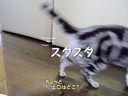 c0211109_0103160.jpg