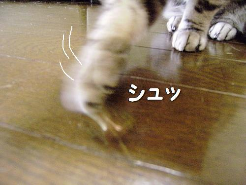 c0211109_0154552.jpg