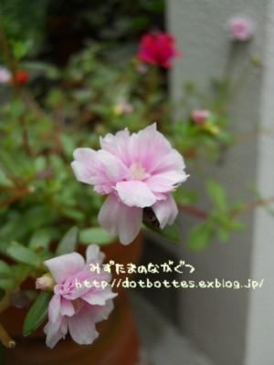 d0170109_1705997.jpg
