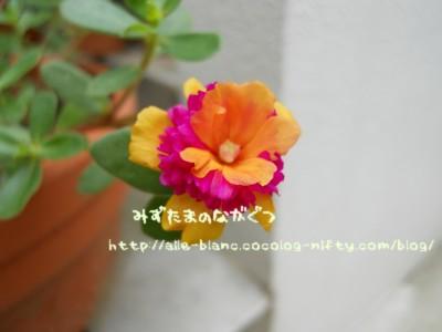 d0170109_1722712.jpg