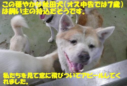 f0121712_12462962.jpg