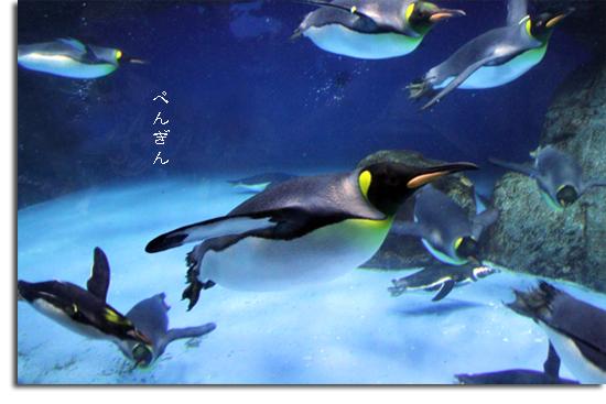 Sea Paradise Vol. 4- Penguins & Other Creatures♪_e0166336_17420100.jpg