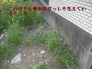 f0031037_20243865.jpg