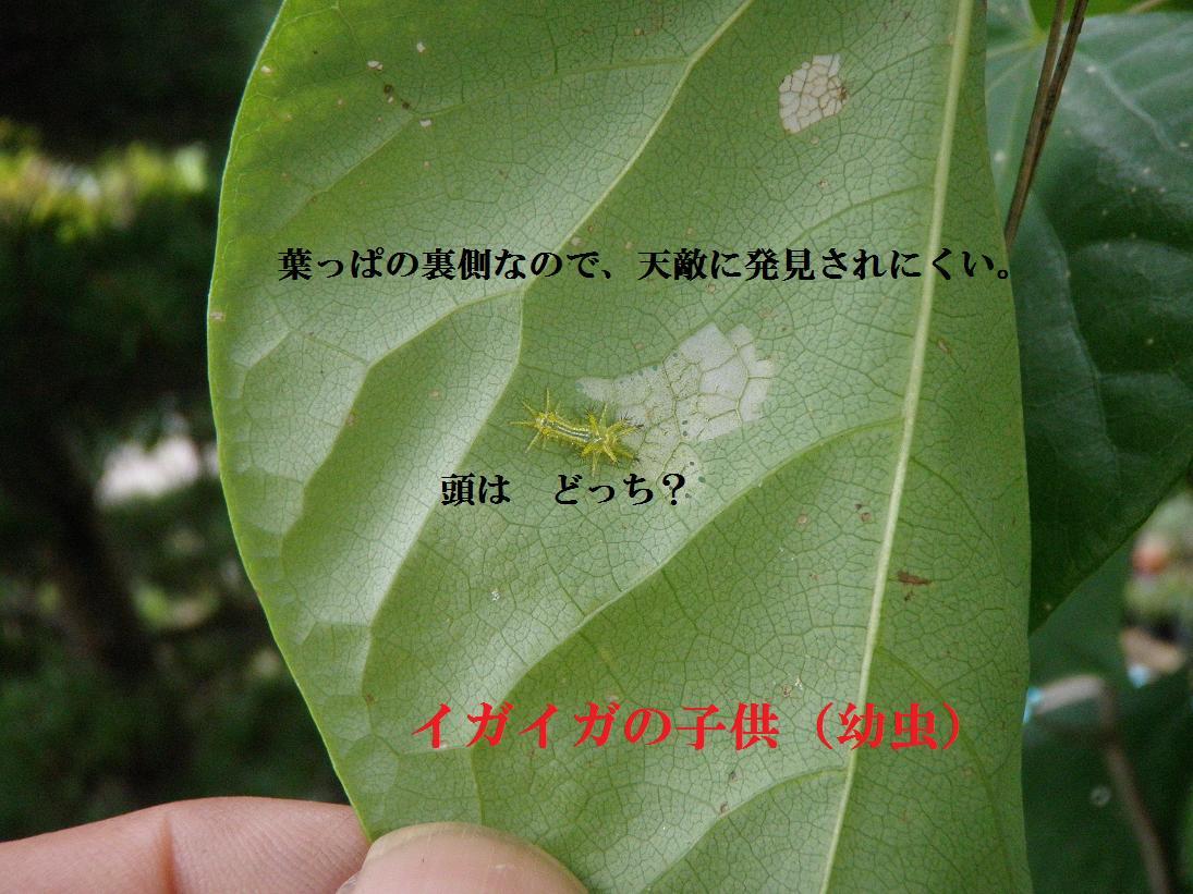 b0193252_18573775.jpg