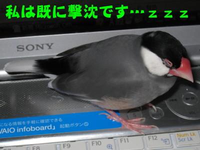 b0158061_2031214.jpg