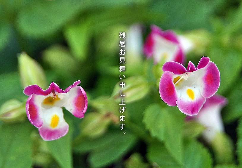 f0198771_0392598.jpg