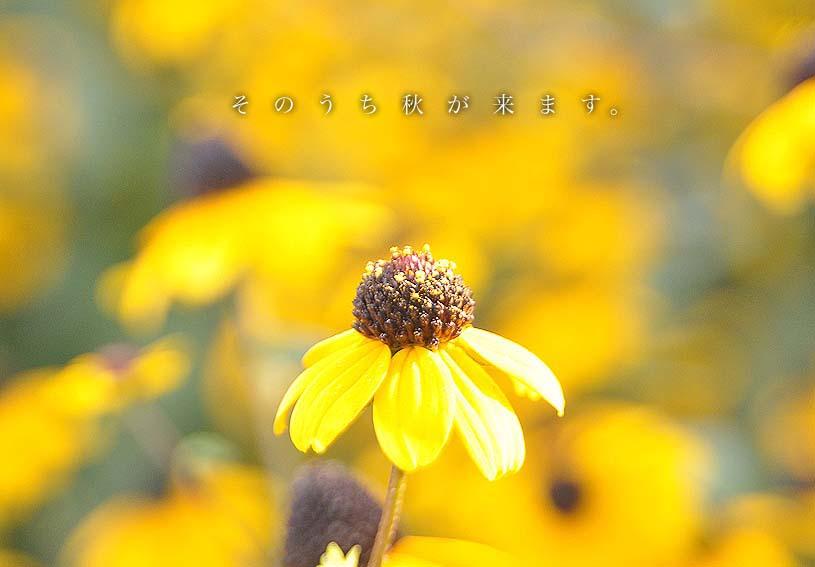f0198771_0454220.jpg
